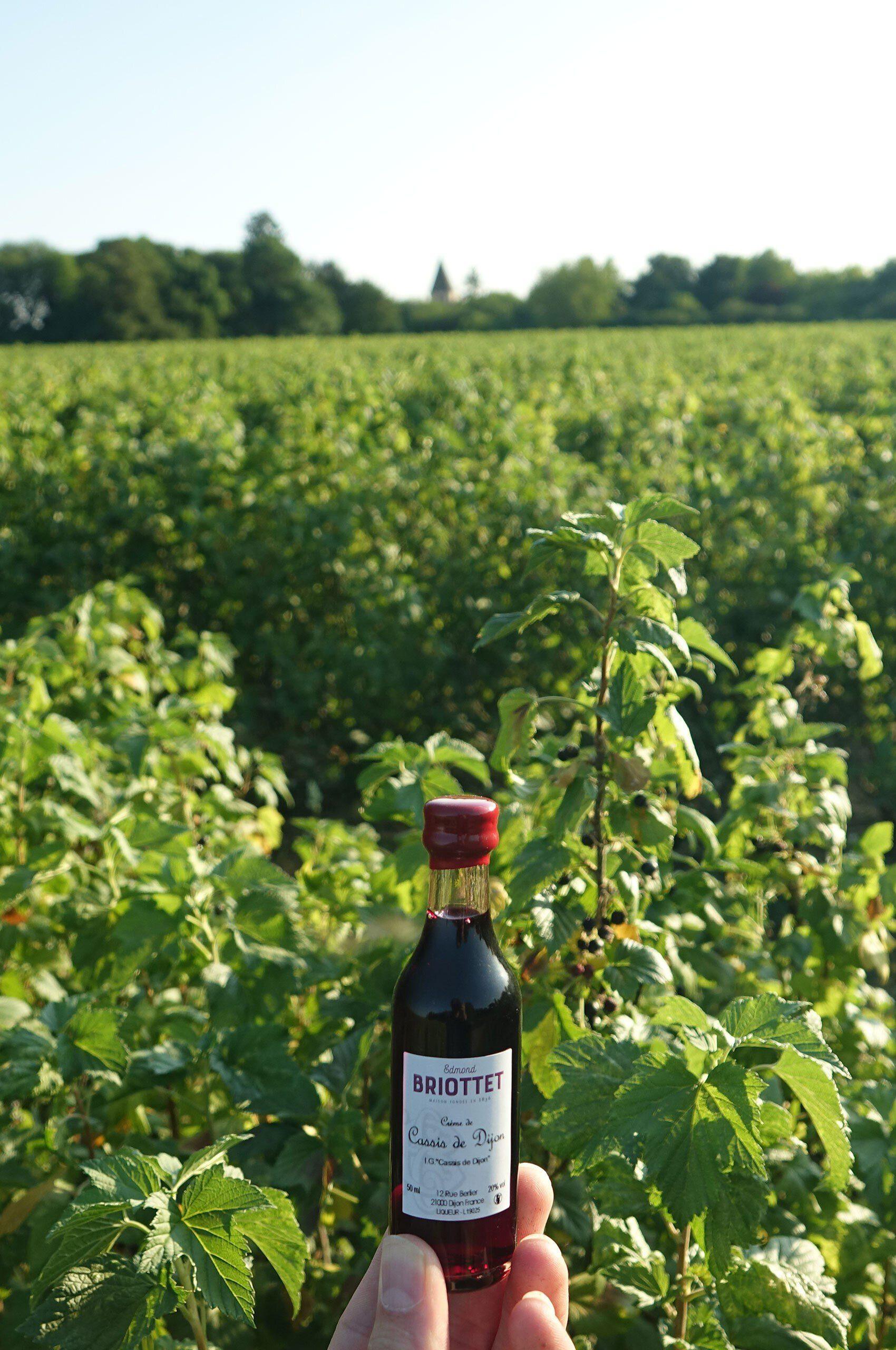 cassis-noir-de-bourgogne-briottet