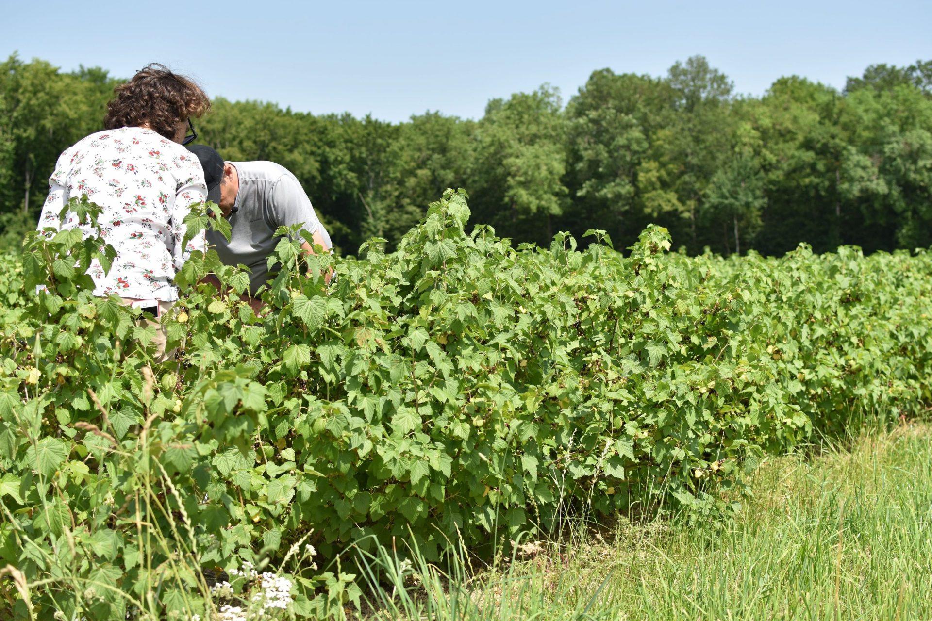 Cassis-Dijon-Briottet-Coopérative-Socofruits